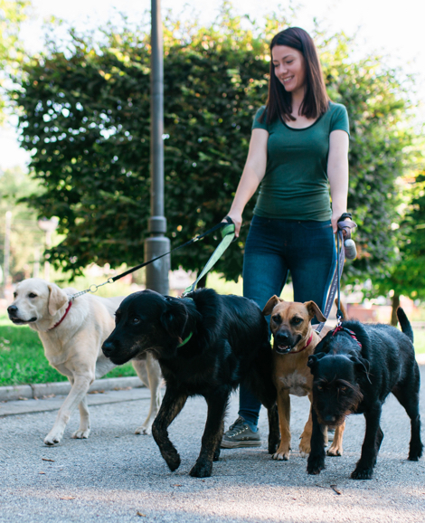 Dog Walkers | Insurance for Canadian Pet Care Professionals